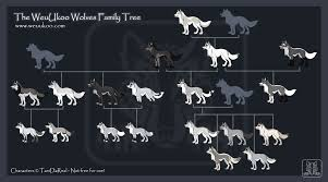 anime black wolf with blue eyes. Modren With WeuUkoo Family Tree And Anime Black Wolf With Blue Eyes