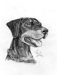 Dobermann Disegno Libero Con Disegno Cavallo Bianco E Nero E Dobby
