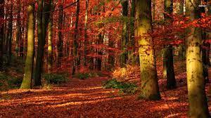 Autumn wallpaper hd, Forest wallpaper ...
