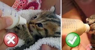you ve been bottle feeding your kitten wrong