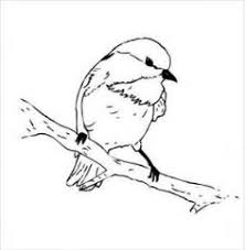 Small Picture 100 Free birds Coloring Pages Color in this picture of an