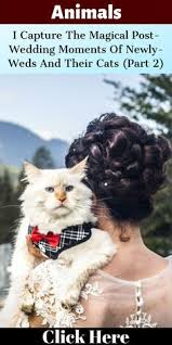 27 Best Cats At Weddings Images Cat Wedding Wedding