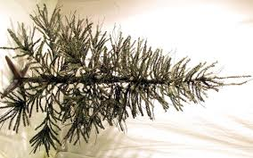 55 Ft And Under  PreLit Christmas Trees  Artificial Christmas 4 Christmas Trees