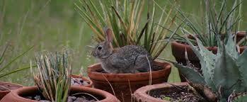 creating a rabbit resistant garden