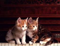 cute kittens sleeping on pianos.  Cute Image For Cute Kittens Sleeping On Pianos