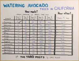 Avocado Tree Size Chart Growing Avocados In Southern California Greg Alders Yard
