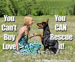 Quotes Dogs All The Time