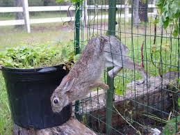 how to keep deer away from garden. keeping deer out of the garden bonnie plants inside dimensions 1024 x how to keep away from