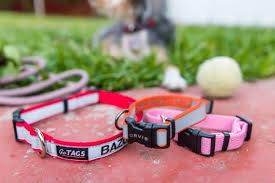 The Best <b>Dog Collar</b>: Reviews by Wirecutter