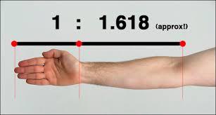 human golden ratio ile ilgili görsel sonucu