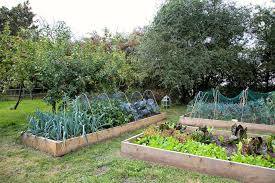 the best materials for building a raised bed