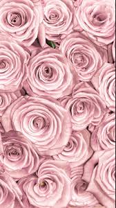 rose gold wallpapers top free rose