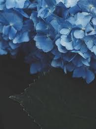 ipad pro wallpaper flowers