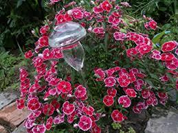 Beautiful Hand Blown Glass Waterers with Self ... - Amazon.com
