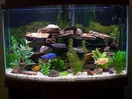 Fish Tank Accessories And Decorations Fish Tank Decoration Ideas for Charming and Refreshing Look 37