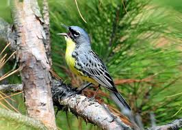 Climate change shifts songbird populations | Great Lakes Echo