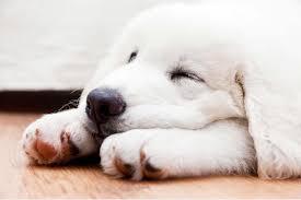 Antibiotics Allergies in Dogs - Symptoms, Causes, Diagnosis ...