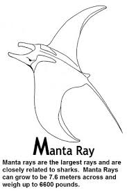 Small Picture Manta Ray Coloring Pages And Facts