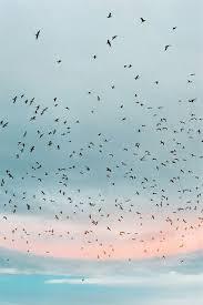 birds flying in the sky tumblr. Fine Tumblr Untitled Via Tumblr And Birds Flying In The Sky A