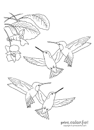 Small Picture Hummingbirds Print Color Fun Free printables coloring pages