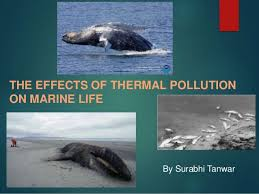 on pollution of marine life essay on marine life pollution dental vantage dinh vo dds