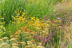 new england new england garden best perennials perennials for new england great