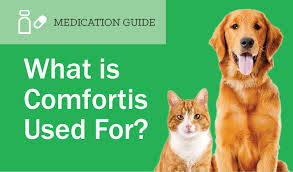 what is comfortis. Exellent What Carprofen For Dogs Inside What Is Comfortis H