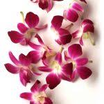 hawaiian leis flower hawaii flower lei info