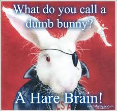 Image result for hare brain images