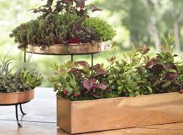 Houseplants growing on a windowsill