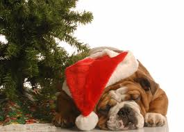 Merry Christmas | Bulldog Blog