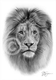 detailed lion drawings in pencil. Interesting Drawings Lion Pencil Drawing Throughout Detailed Drawings In Pencil Y