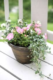 how to create potted garden containers that will bloom all summer long