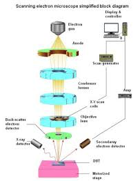 The Difference Between Scanning Electron Microscopes And
