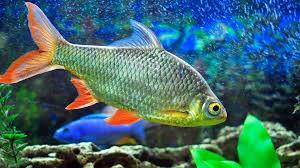 Fish Tank How To Clean Dirty Fish Tank Glass Aquarium Care Youtube