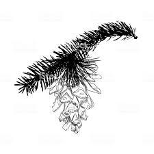 手木の円錐形の松を描きますモミ枝に針を使用した描画の松ぼっくり