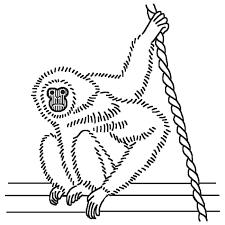 テナガザル1白黒サル猿の仲間動物の無料イラスト素材