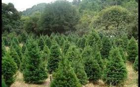 Christmas Tree Growers In New JerseyValley Christmas Tree Farm
