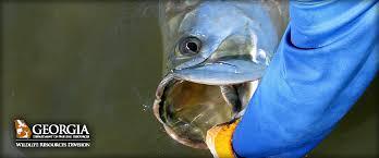 Florida Freshwater Fishing Regulations Chart Georgia Fishing Regulations Guide 2019 Eregulations