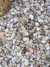 Point Of Rocks Siesta Key 2019 All You Need To Know