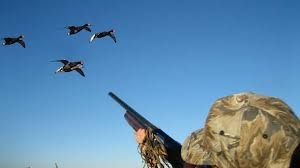 Duck Hunting Tips For Beginners | The Best And Most Complete ...