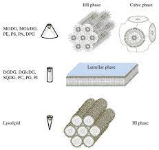 shape structure concept of lipid