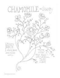 Chamomile Stability Coloring Page My Soulflower