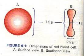 Image result for cells size dimensions