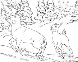 Small Picture Deer doe buck snow Coloring Page Free Deer Coloring Pages