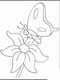 Vlinder Op Bloem Kleurplaat Gratis Kleurplaten Printen