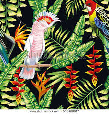 Small Picture Tropical Birds Stock Images Royalty Free Images Vectors
