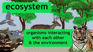 essay on the important types of ecosystems words