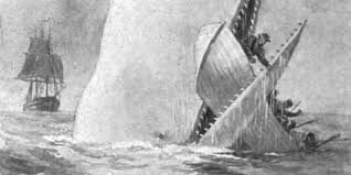 scientific inaccuracies you didn t know were in moby dick 5 scientific inaccuracies you didn t know were in moby dick the huffington post