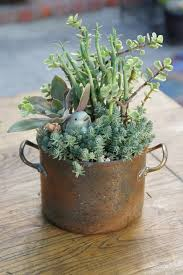 Succulent re-purposed container by Simply Succulent